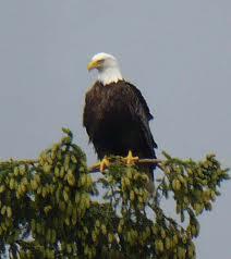 sales eagle