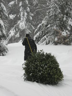 Chopping Down the Christmas Tree in VT
