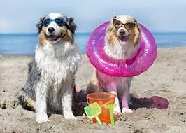 Dog Days of Summer-1