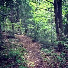 Vermont woodlot
