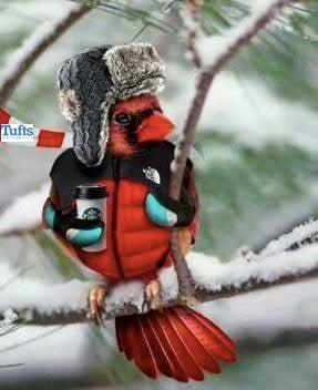 Winter bird-tufts