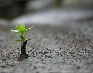 emotional-resilience-plant-lydur-flickr